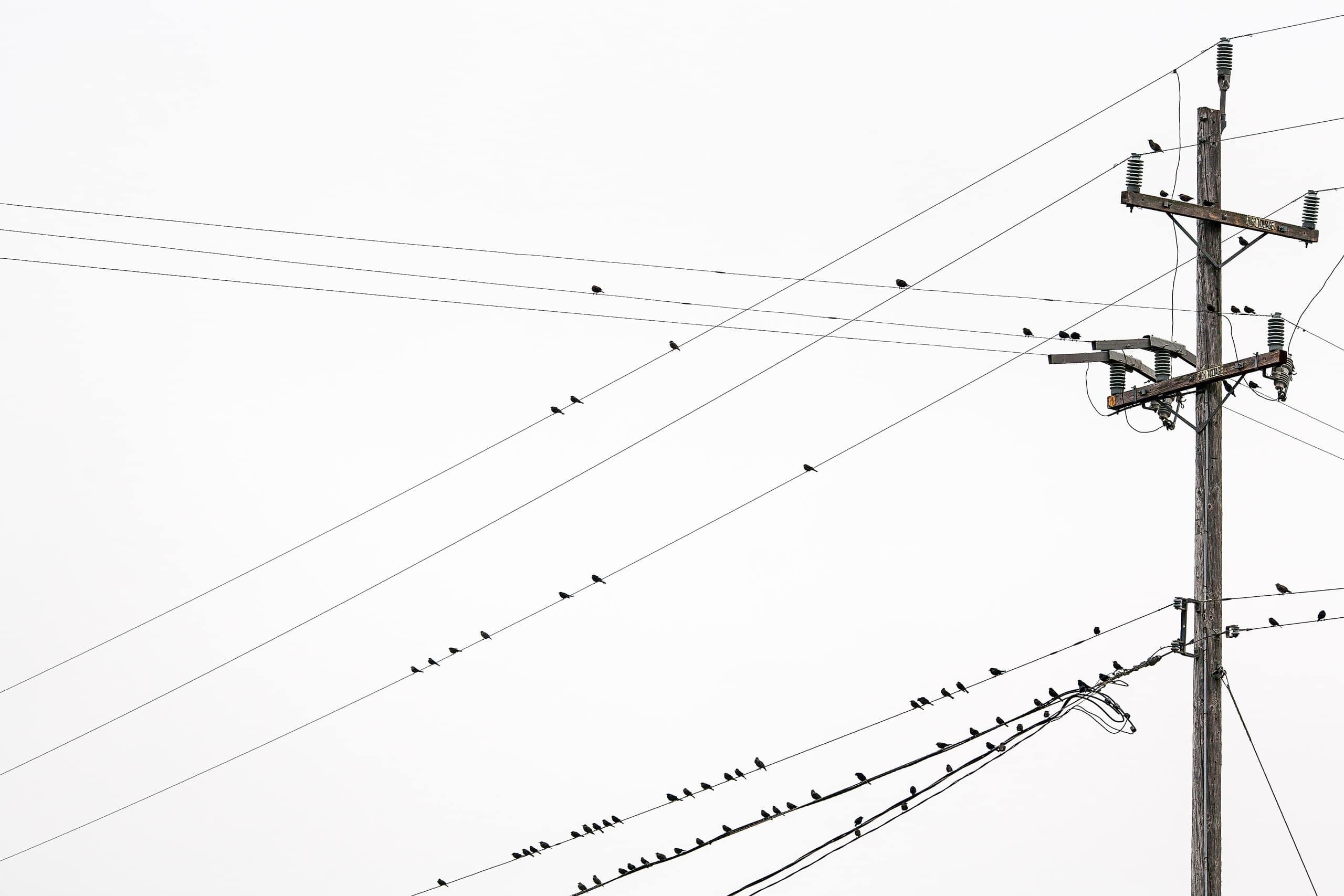 SANTA-CRUZ-WIREBIRDS-02-7778
